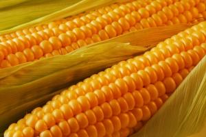 Консервировать кукурузу в домашних условиях